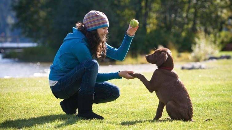 dog training service providers in burlington