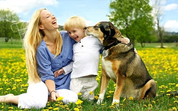 Dog Aggresion Training and Dog Relationship Services in Salem County