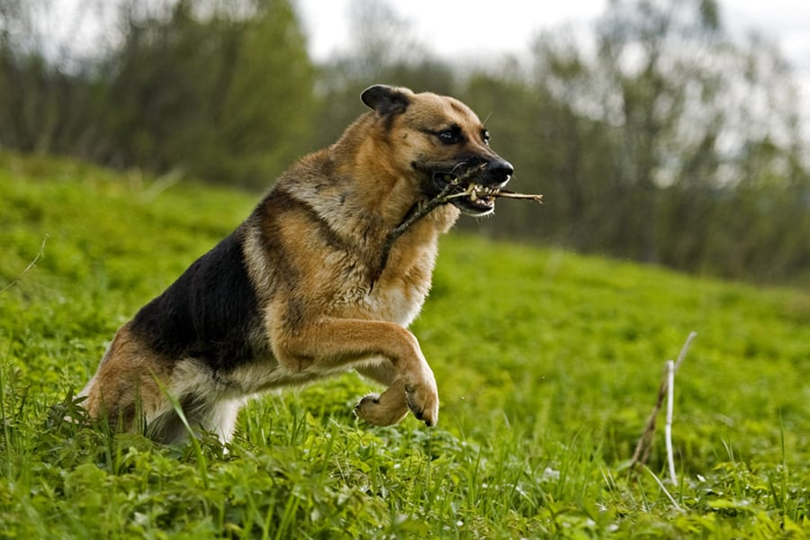 Dog Aggression Services in New Jersey