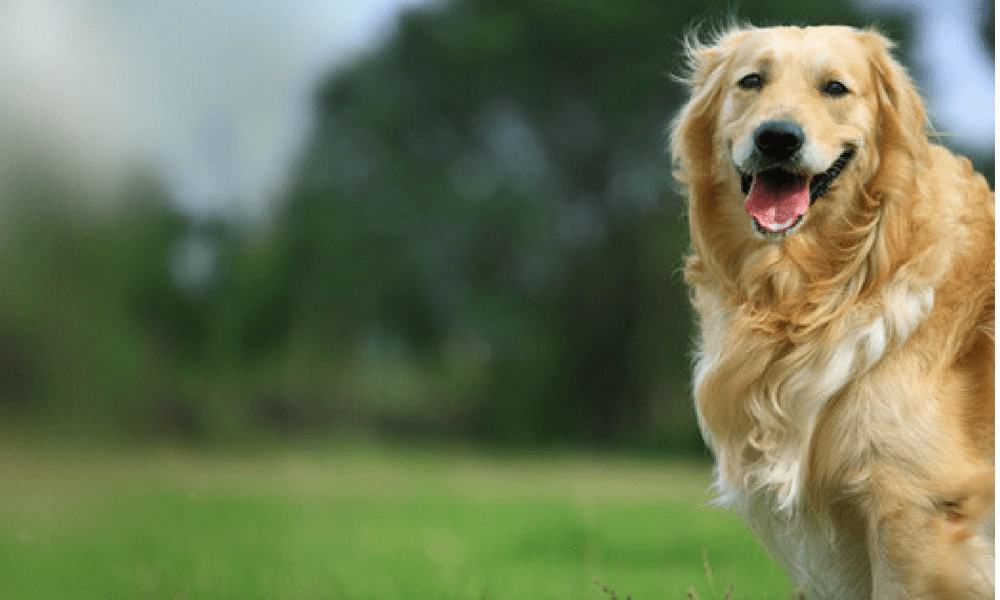 Dog Training Service Tips & Tools